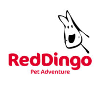 Red Dingo